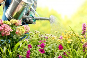Garden Maintenance in Perth