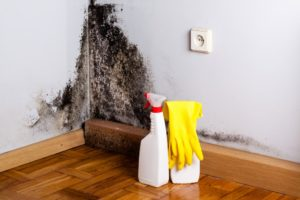 Preparation to remove black mold from a corner of a room