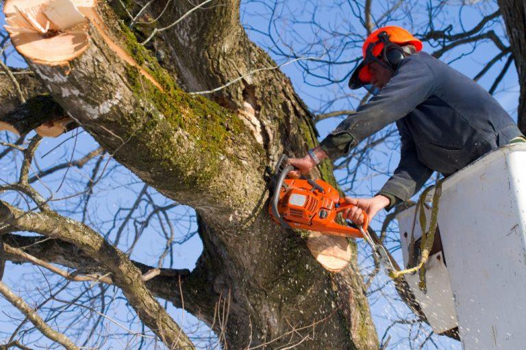 Professional tree surgeon