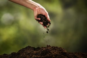 Hand holding clump of soil