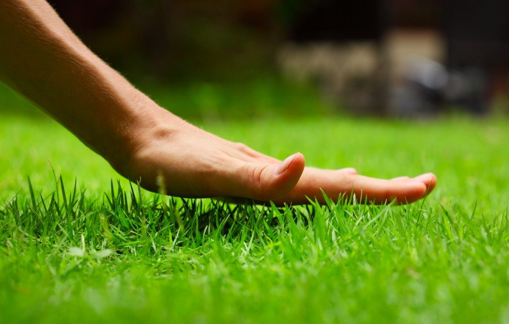 Hand feeling the lawn grass