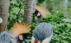 close up shot of a crane bird