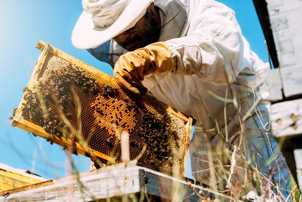 Beekeeper checking on his bees