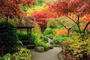 trees in garden during fall season
